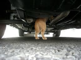 ボンネット猫侵入